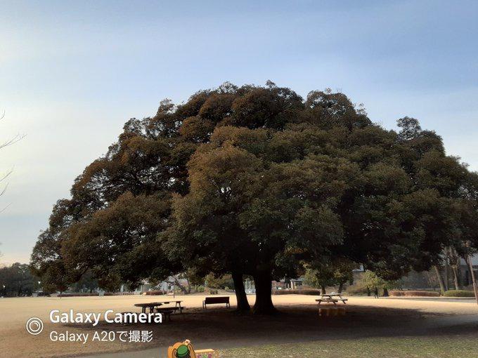 Galaxy A20で撮影した写真
